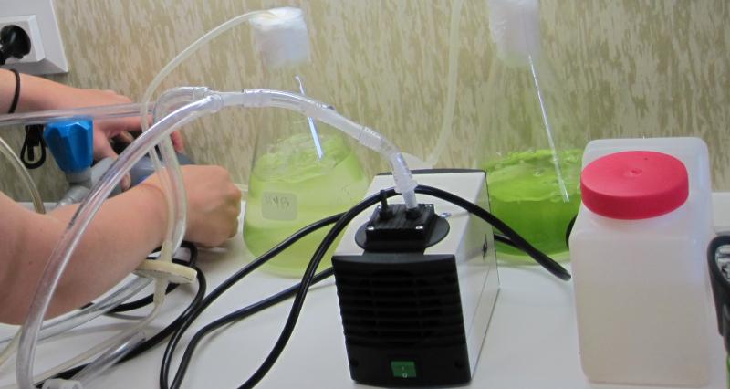 Growing-Algae