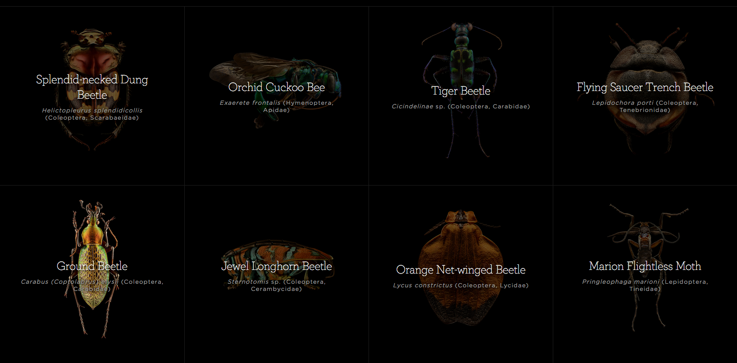 several large scale images of insects