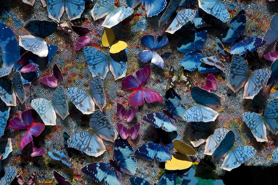 butterfliesdetailsmall