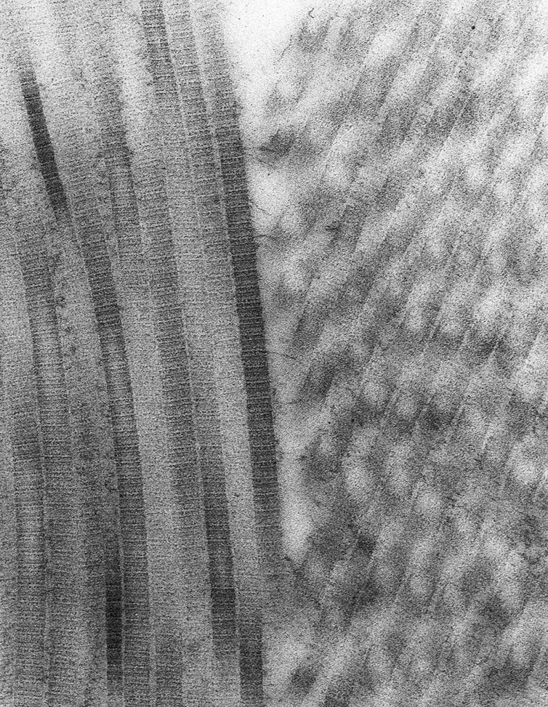 A black and white micrograph of collagen fibrils