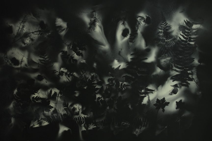 A dark shadowscape populated by strange, fungal forms