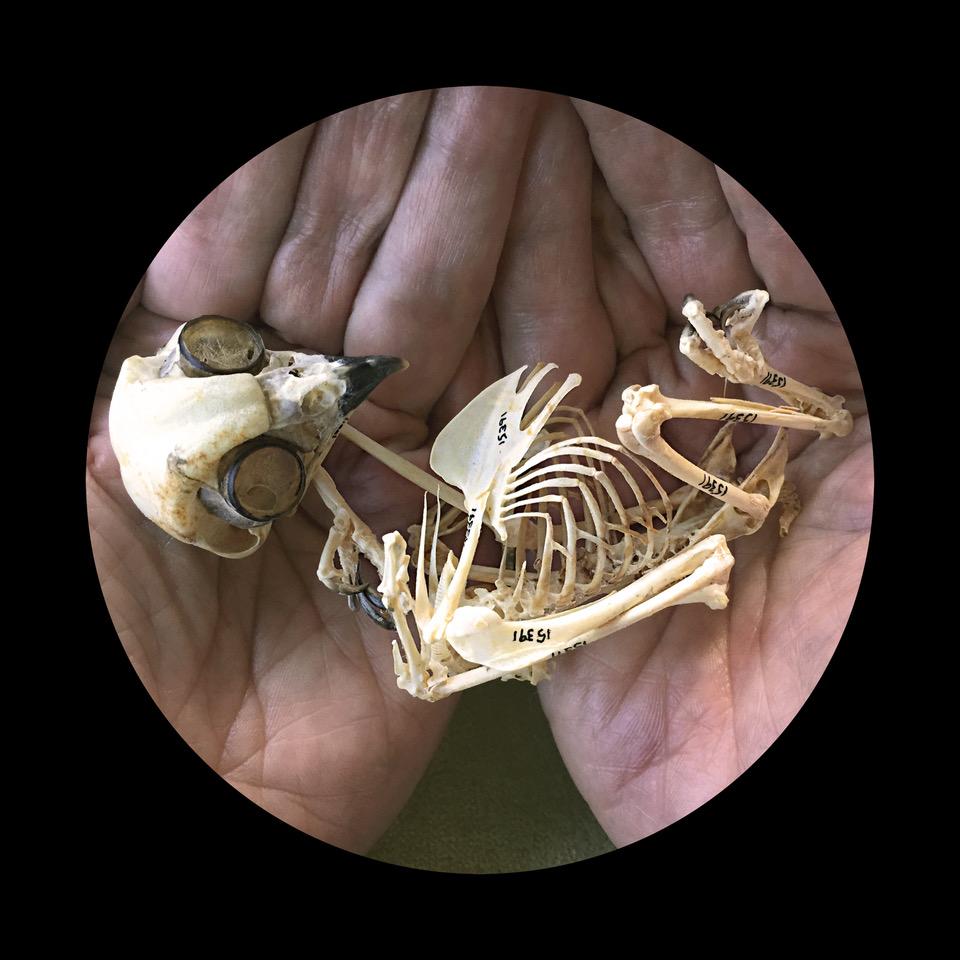 An image from Catherine M. Stewart's latest exhibition, Skin & Bones.