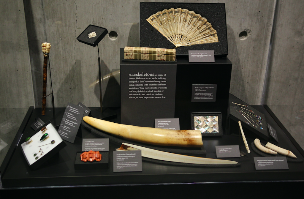 Accessories from the clothing collections of Claus Jahnke & Ivan Sayers, on view in Skin & Bones.
