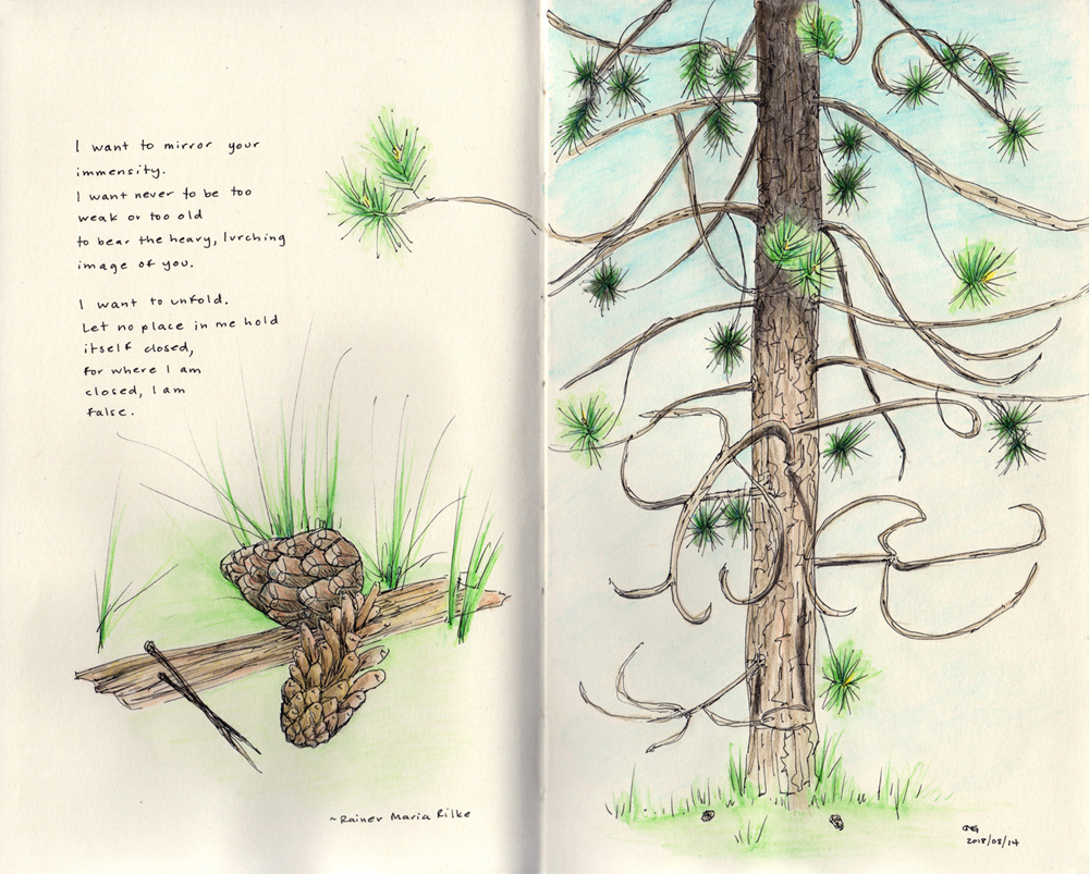Nature sketch and poem