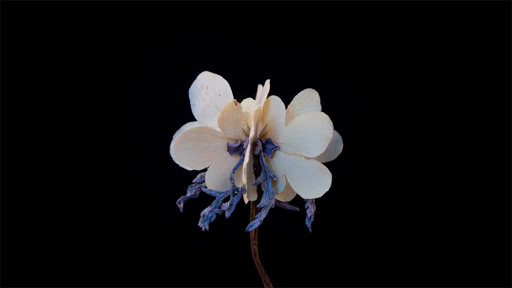 "A collaged ""frankenflora"" by Katrina Vera Wong"