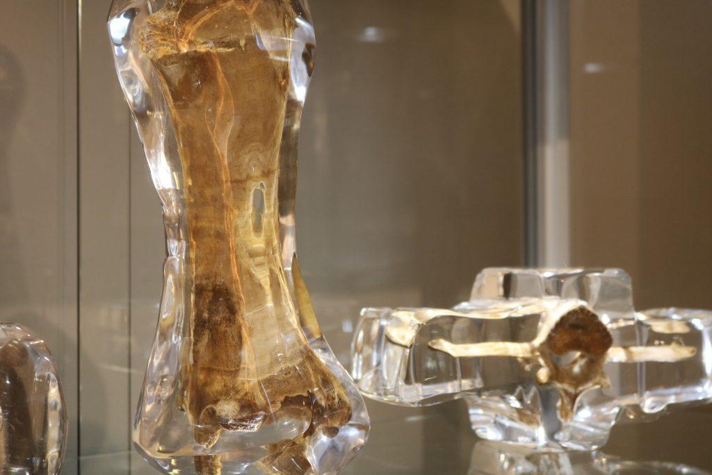Cow bones encapsulated in lucite