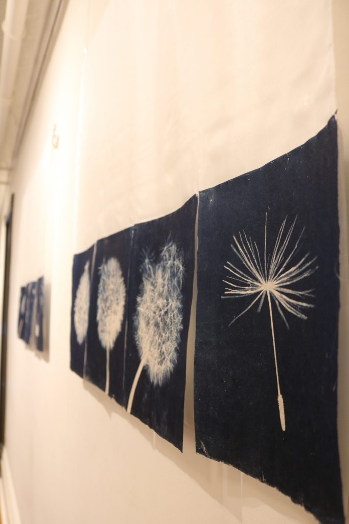 A piece with various illustrations of the seed head of a dandelion plant
