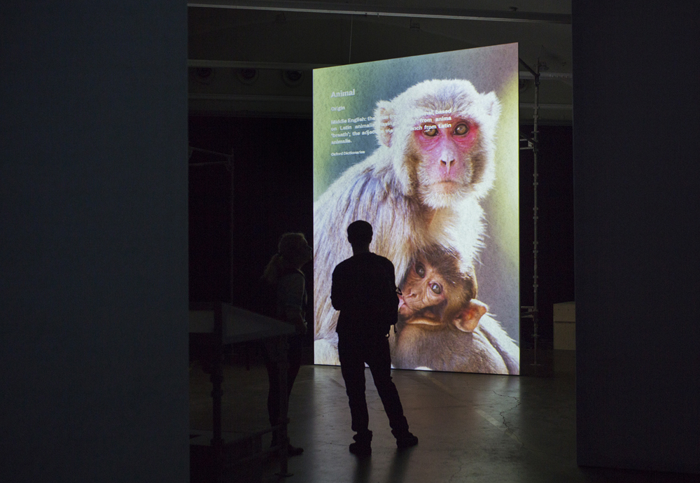 Image of a monkey (artwork)