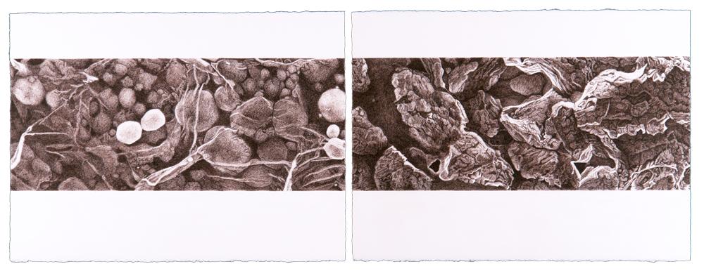 sciart by Karen Gustafson