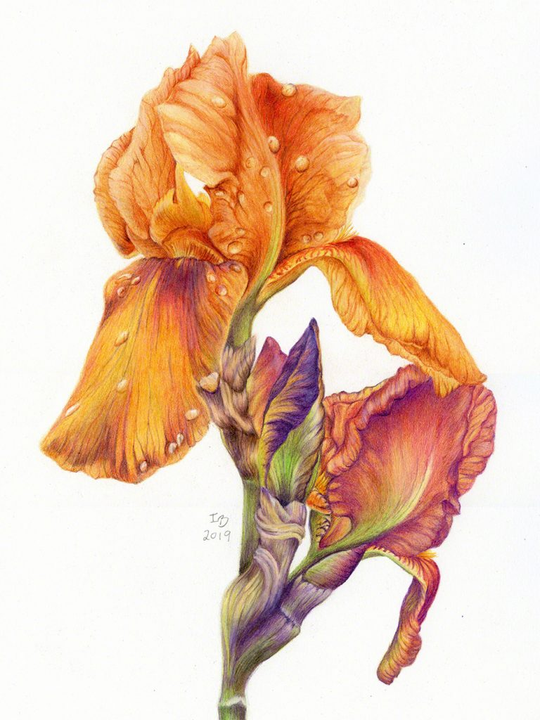 A watercolour flower by Ilka Bauer