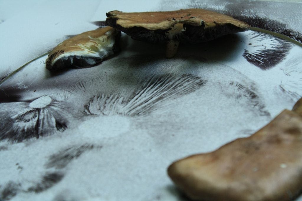 Half of a large brown mushroom, poised over a sheet of paper, its spores carefully outlined below.