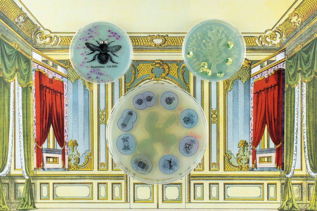 a collage baroque theatre, featuring GMO bacteria
