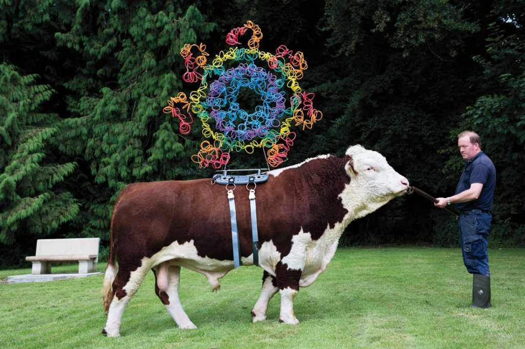 A photo of a cow with a strange colourful contraption on its back