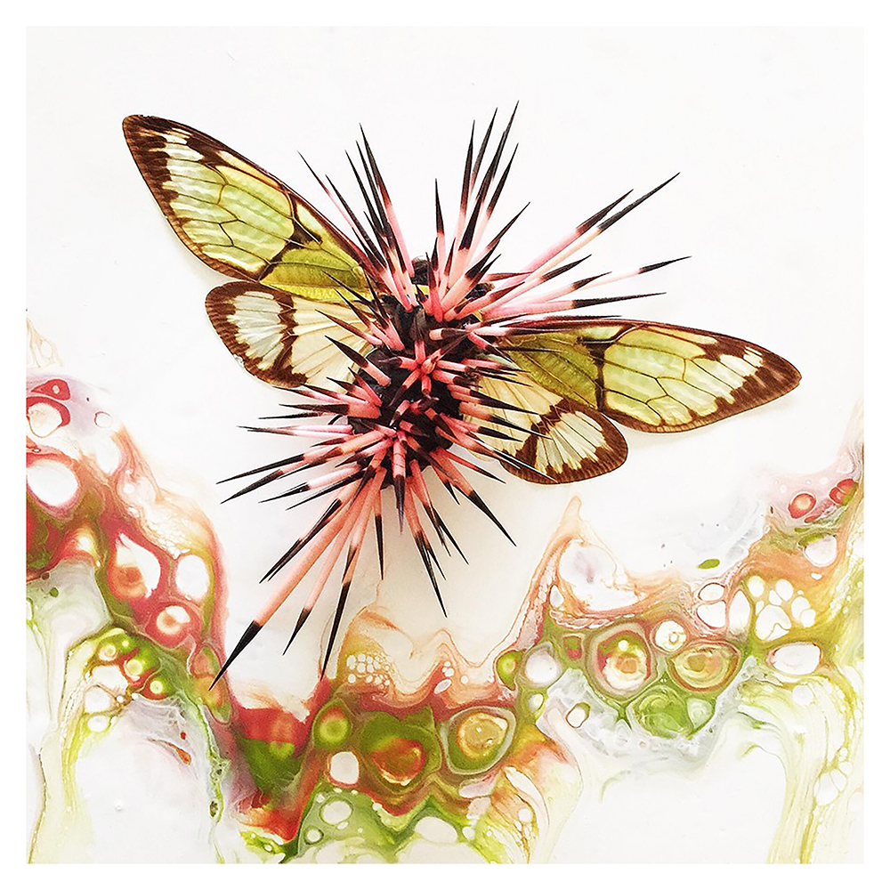 spiky pink bug, sciart