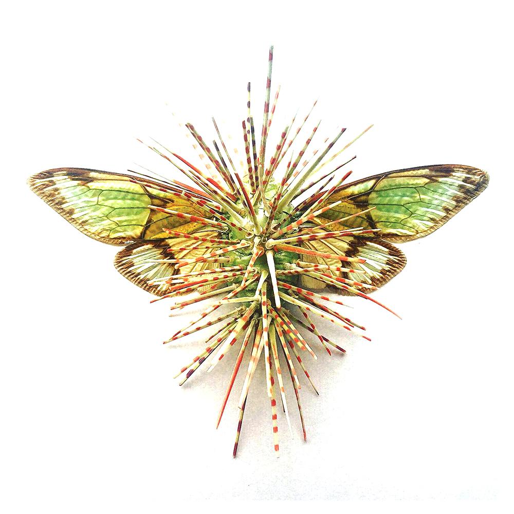 green spiky bug, sciart