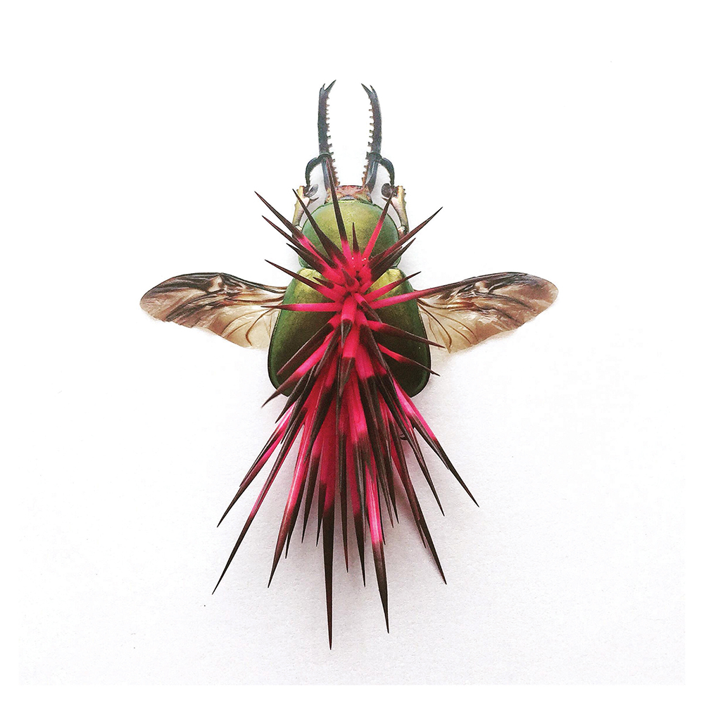 pink and green spiky bug, art