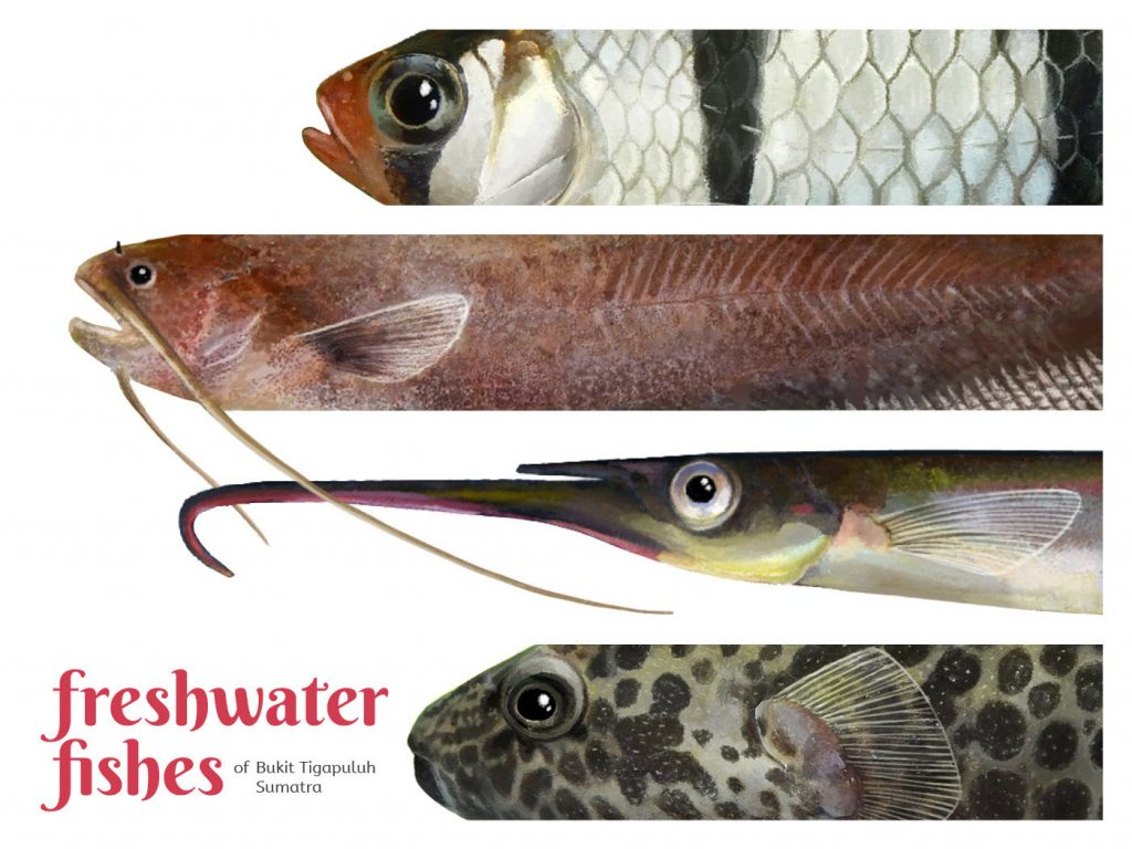 Profile of four different fish stacked from top to bottom.