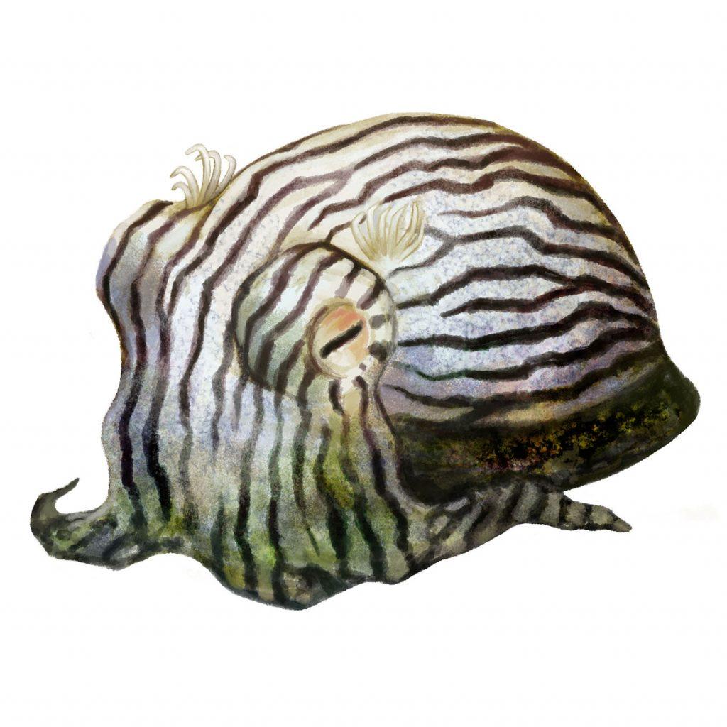 Illustration of a pajama squid