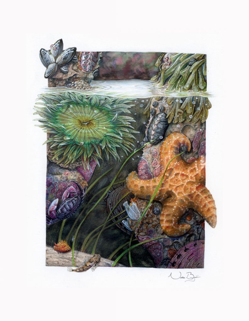Scene at the edge of a tide pool with multiple marine animals, including a sea star, anemone, fish, and mollusks.