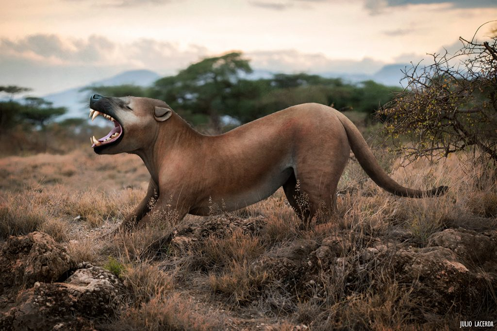 Preshistoric large cat yawning in what looks like the African savanna