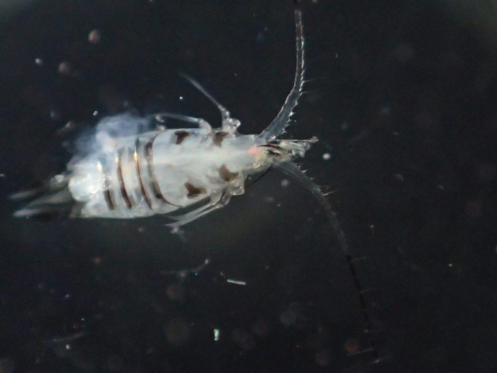 macro photo of plankton