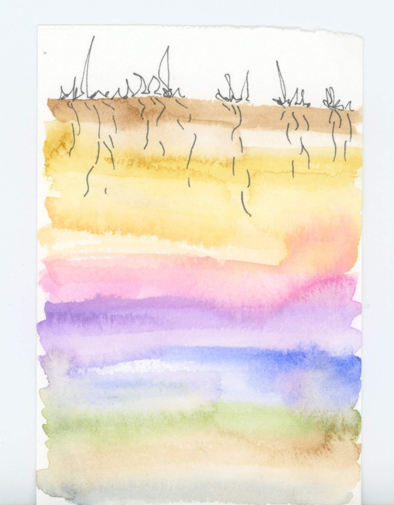 Soil profile with simple line drawings of plants at the top and a pastel rainbow gradient of soil below.
