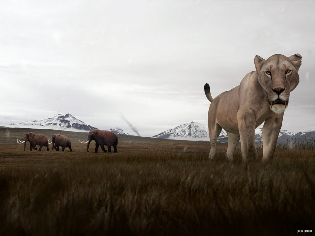 Saber-toothed cat walking in a grassy field with snowy mountains behind it. Three mammoths are in the distance.