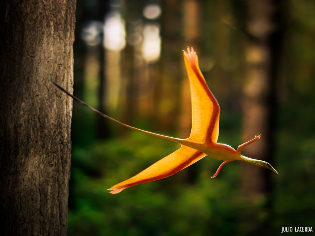 Bright orange lizard with wing-like skin on its hind legs gliding through the forest