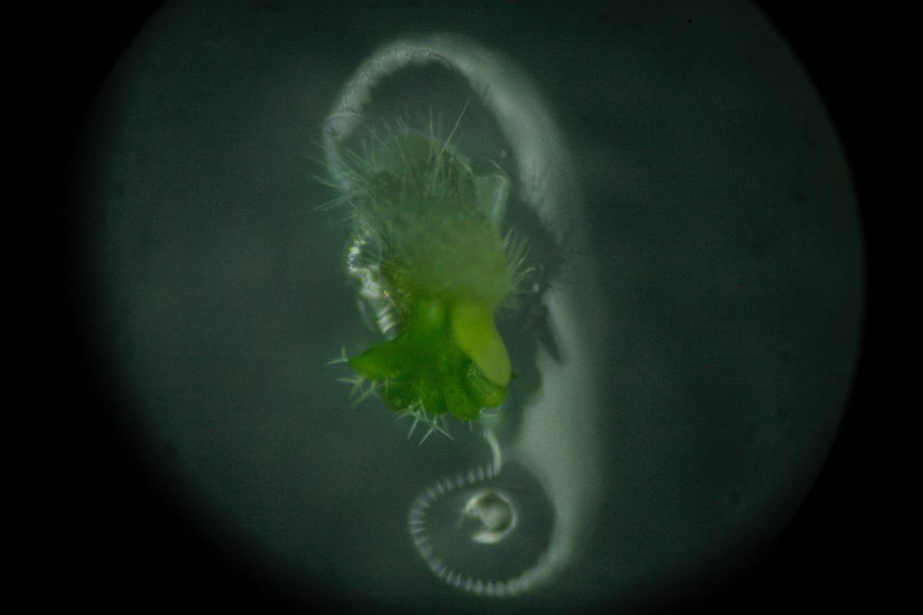 An image of a green, slimy, plantlike organism (science art)