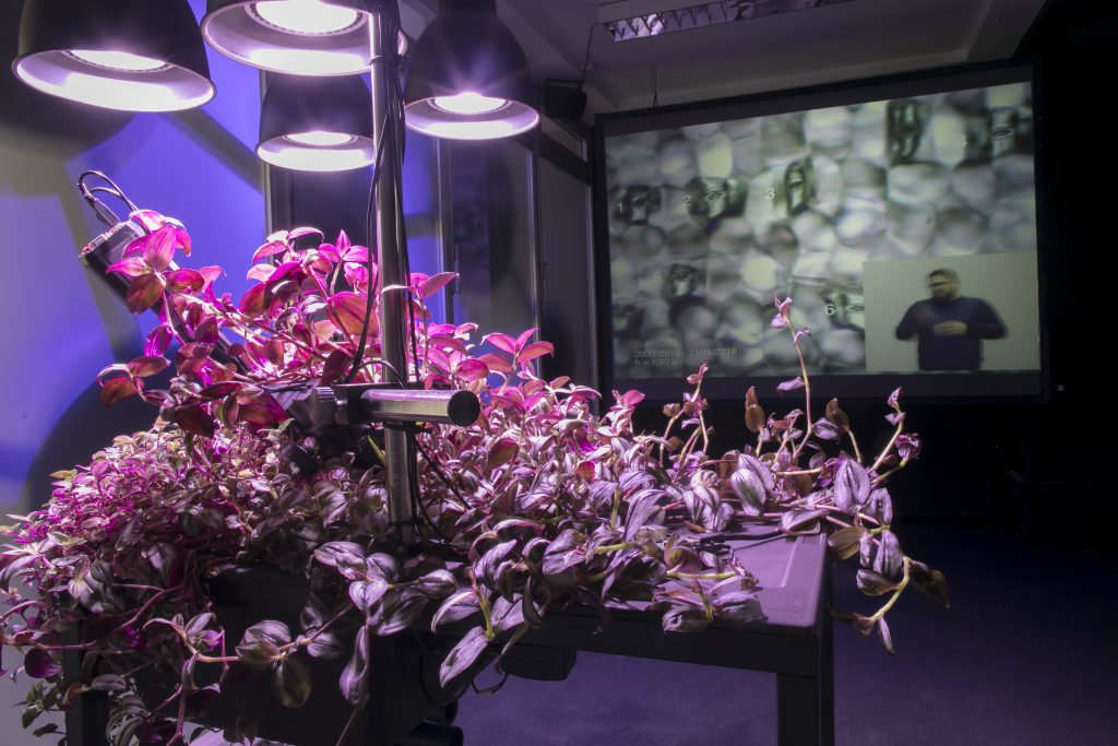 Flowery vines cover a display table, lit by bright lights and a strange screen in the background (science art)