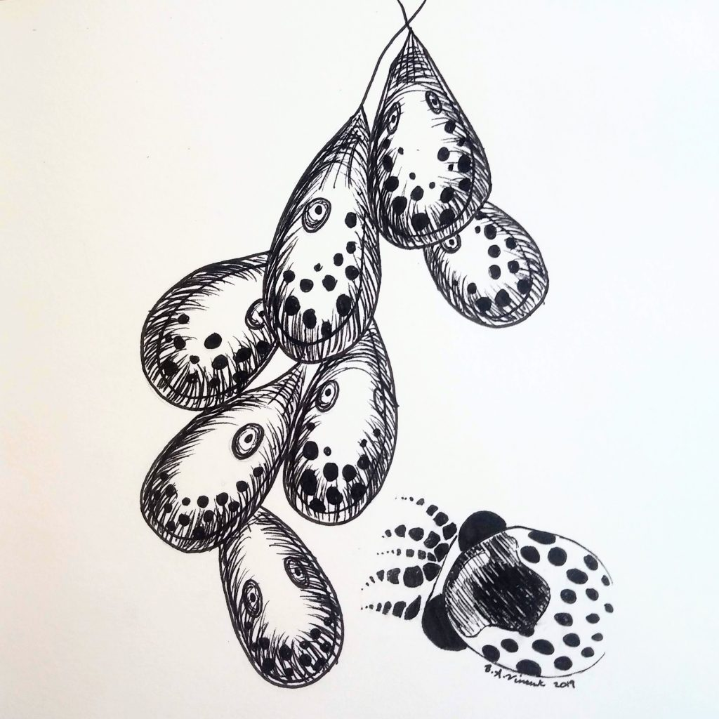 Black and white image of octopus eggs that look like tiny octopuses inside teardrop-shaped sacks.