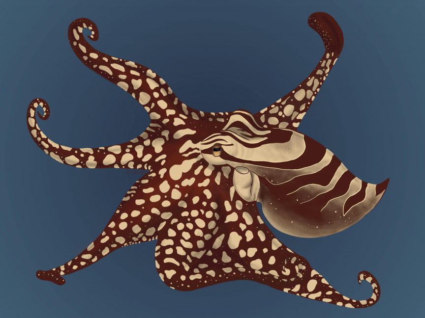 larger striped Pacific octopus with its tentacles extended outward.