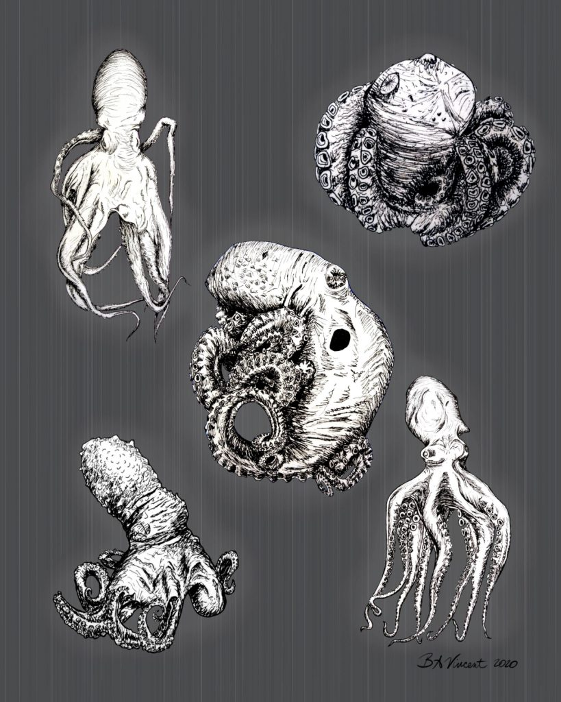 Five different octopuses drawn in black and white.