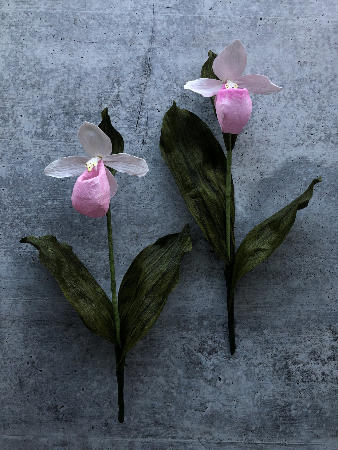 Two Pink Lady Slipper Orchids