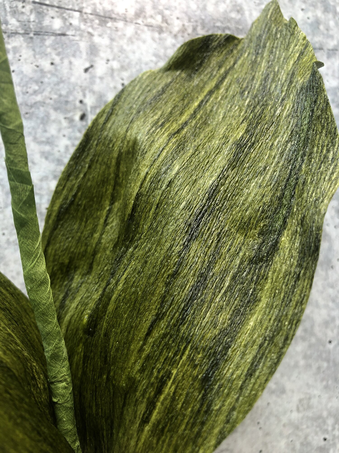 Leaf of Pink Lady Slipper Orchid