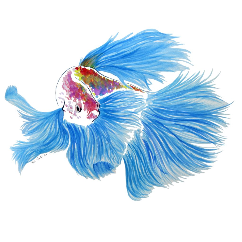Colorful betta fish with rainbow scales and blue fins