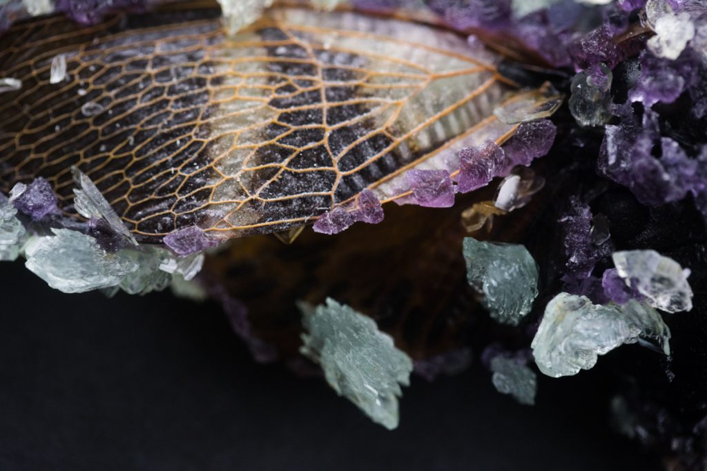 Close up of cicada wing with small purple crystals along the edges.