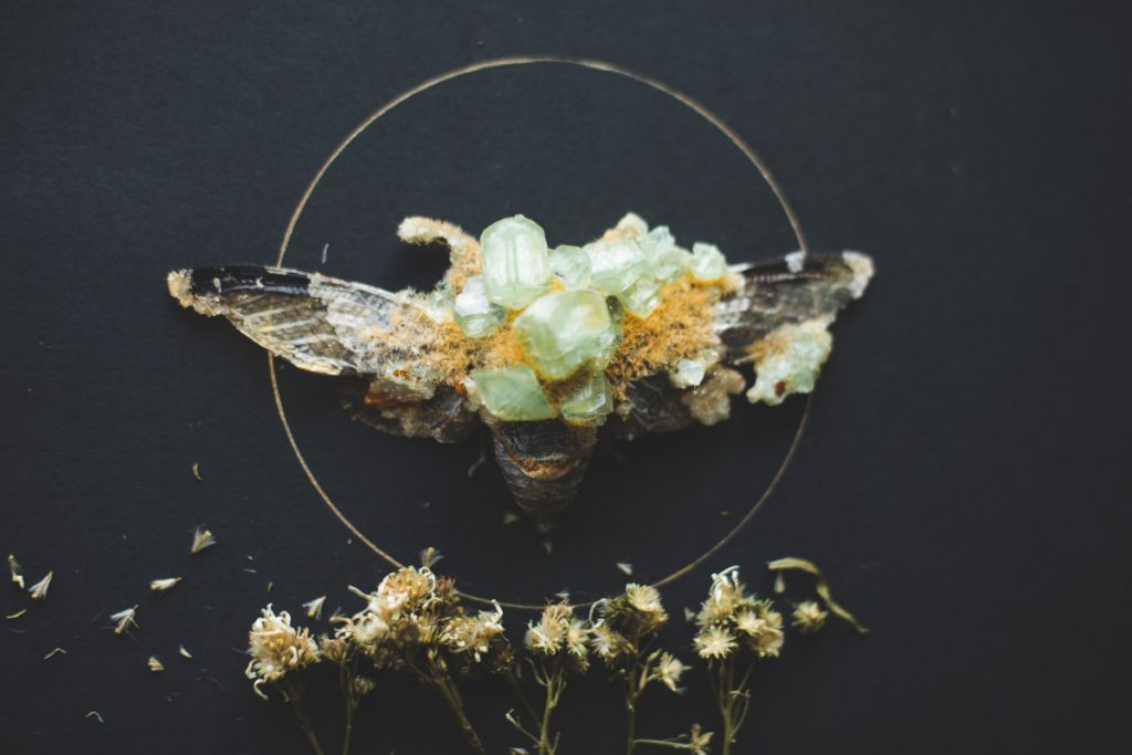Cicada with large, light green crystals growing out of its body.