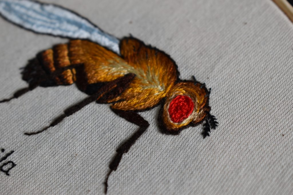 Close-up image of embroidery of a fruit fly.