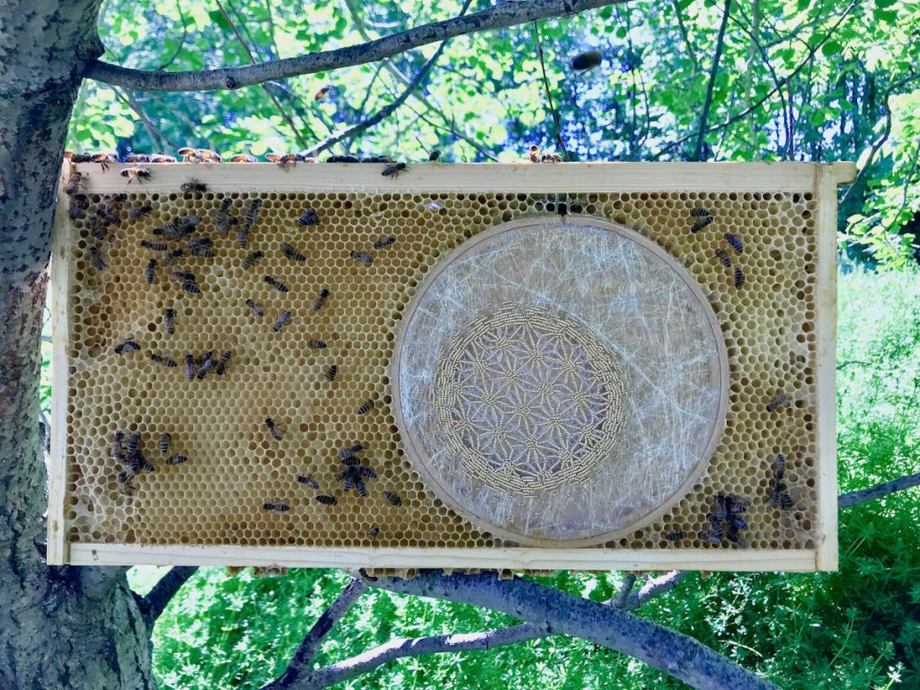 Circular embroidery hoop with tissue paper and a smaller circle of embroidered gold beads in a starburst pattern. The hoop is embedded in honeycomb surrounded by honeybees.
