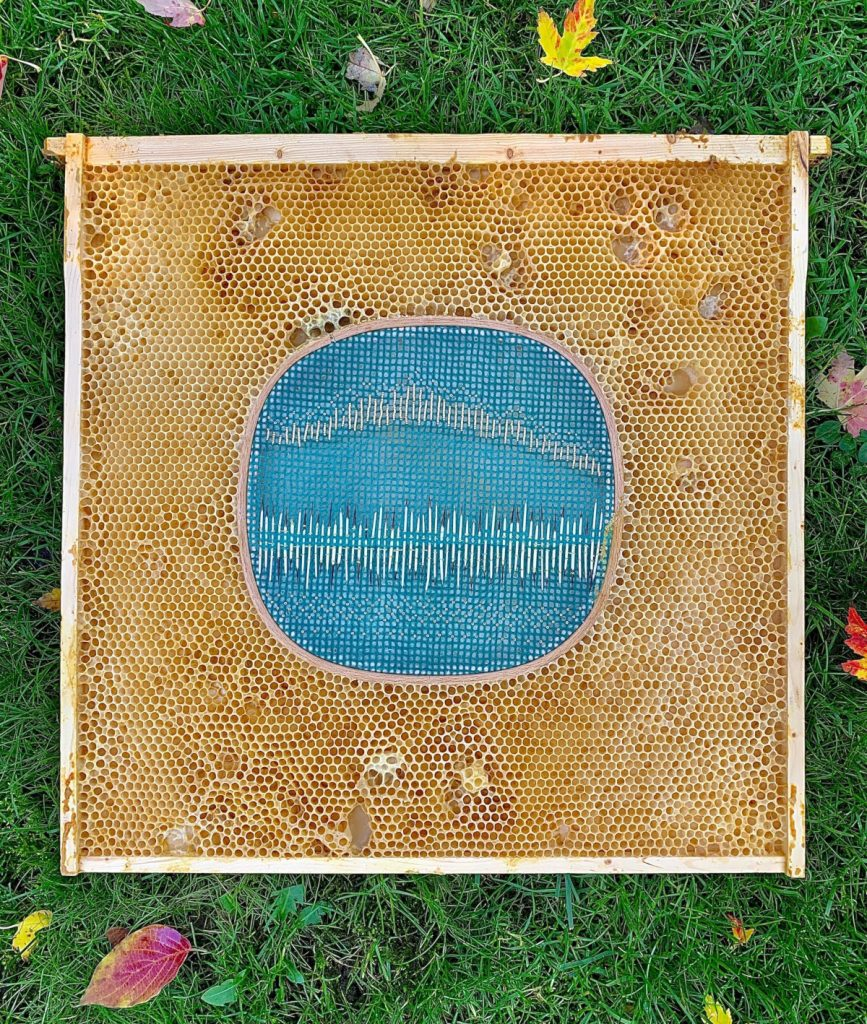 Rounded embroidery hoop with two stripes of porcupine quills on a turquoise surface. The hoop is embedded in honeycomb.