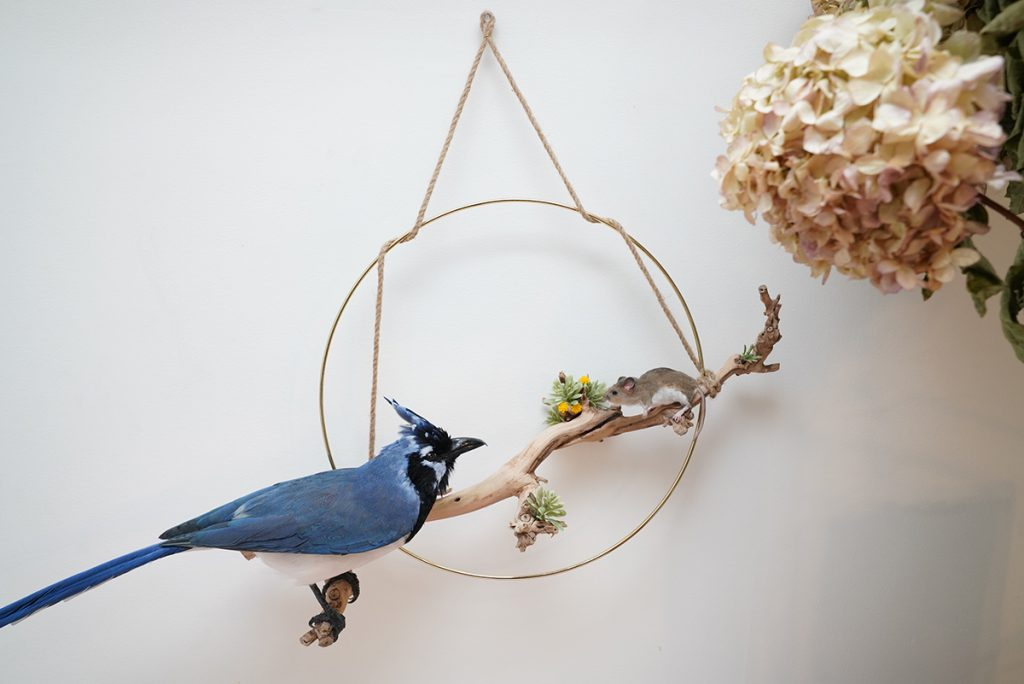 Blue jay sitting on branch looking at brown mouse