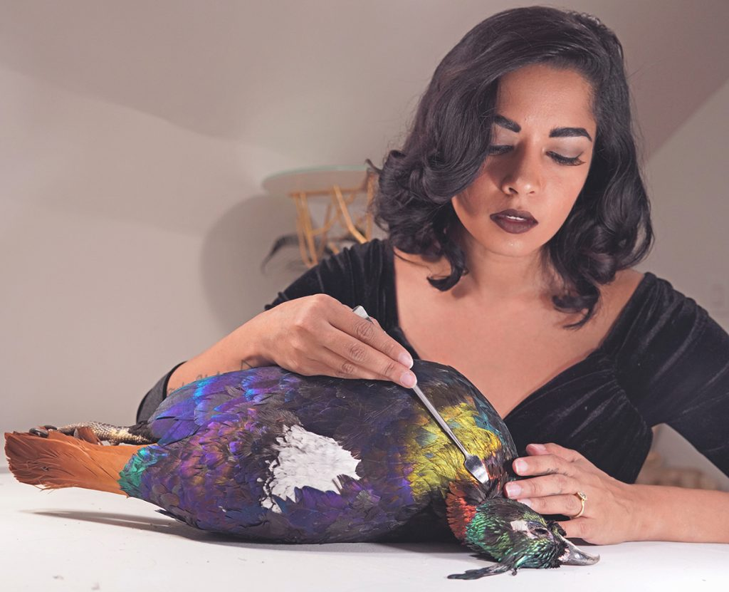 Divya Anantharaman performing taxidermy work on a multicolored bird