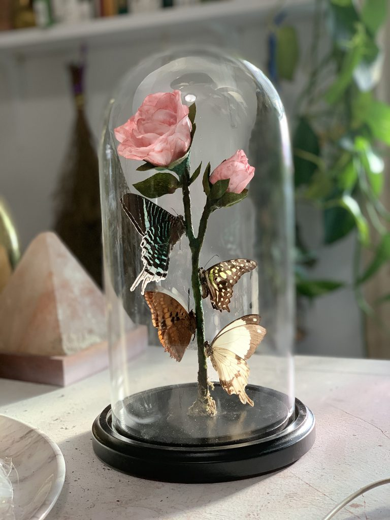 Four butterflies on a rose underneath a glass dome