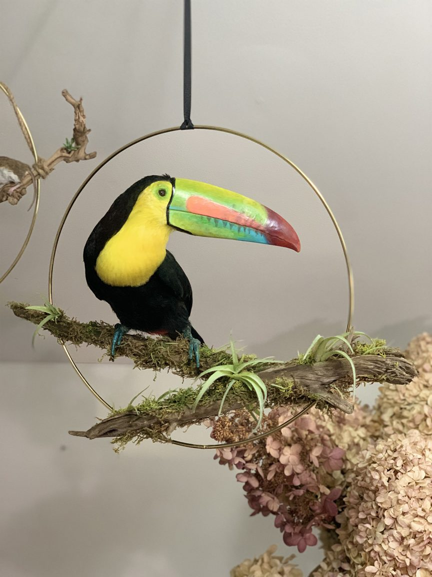 Keel-billed toucan with black and yellow body and multicolored beak
