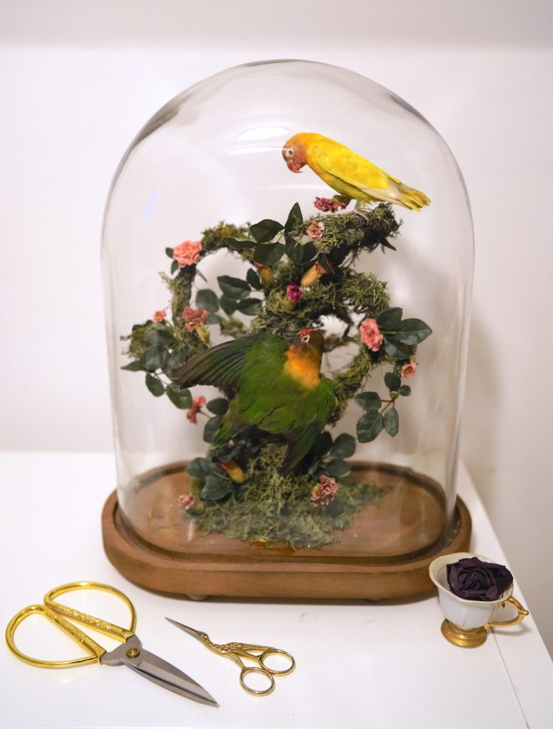 Small yellow bird and small green bird sitting on branches within a glass dome.