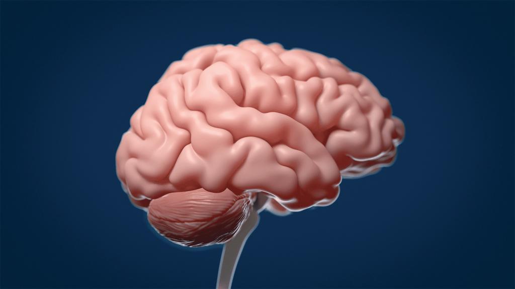 Animation 3D brain by Avesta Rastan. Animated version of a brain.