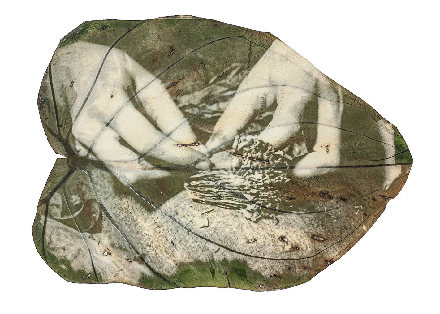 A green and white image of hands printed on a large leaf.