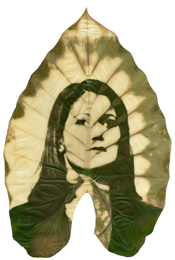 A green and yellow image of a woman looking forward printed on a large leaf.
