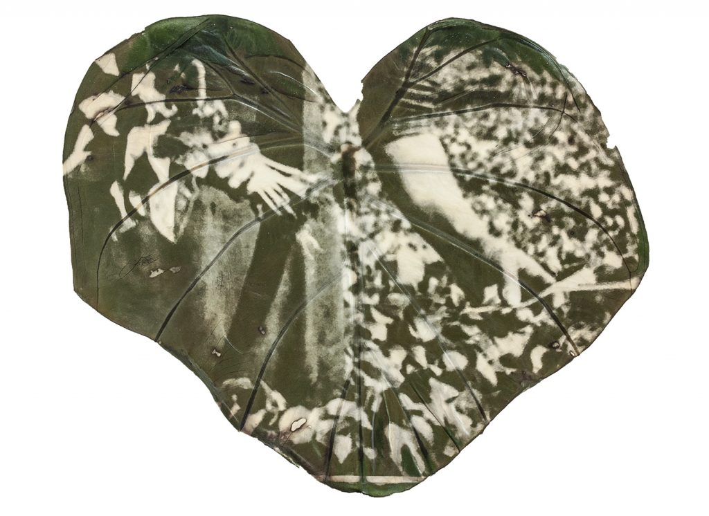 A green and white image of a person bending over picking plants printed on a large leaf.